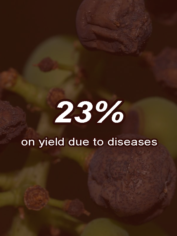 yield due to diseases